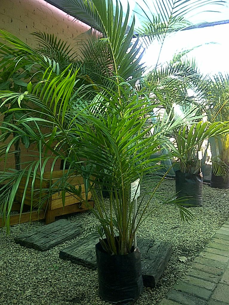 Palms & Tropical plants
